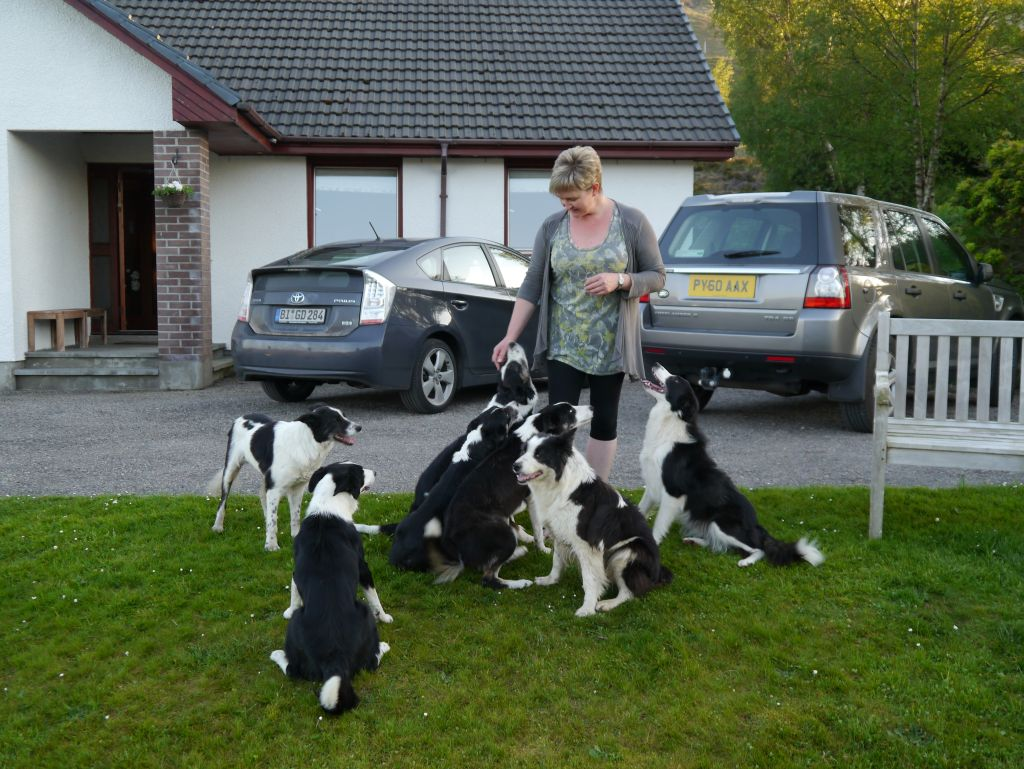 Border-Collies kleiner